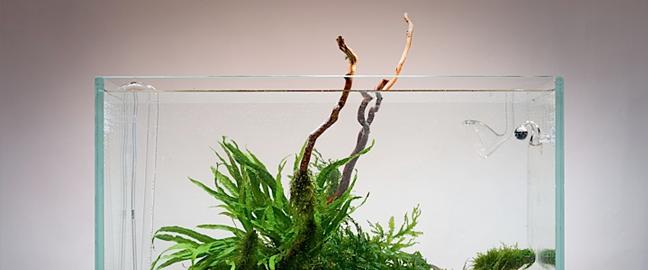 thumb-tgm-planted