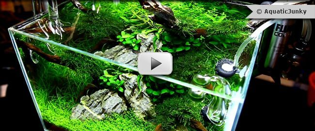 thumb-vivarium-video-ukaps