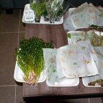 Planten 6